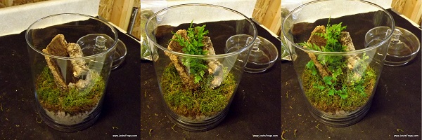 assassin_bug_container_garden_habitat_for_sale_glass_plants.jpg